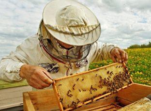 beekeeper-1024x752