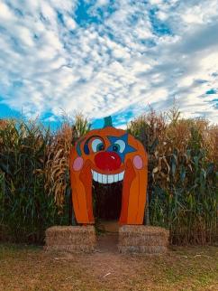 Children's corn maze